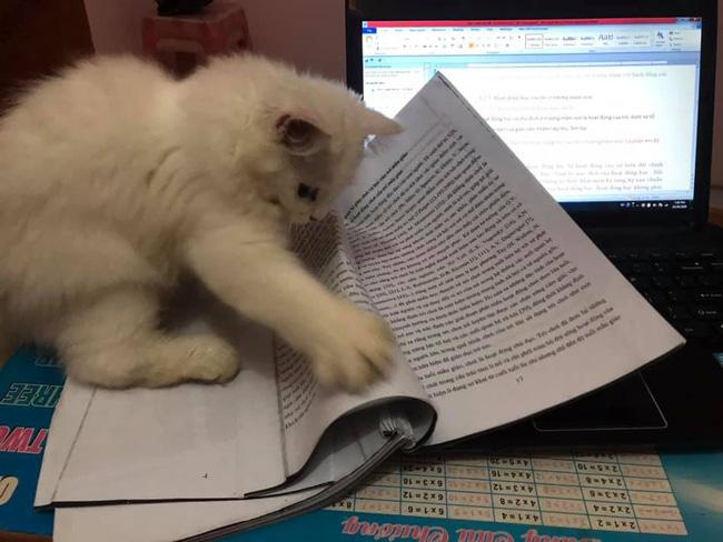 'Học sinh ngày nay học hành vất vả quá', boss nghĩ.