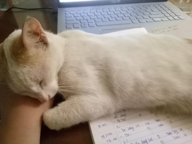 Các đại boss ngủ thế này thì ai nỡ đánh thức.