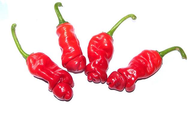Phát ngượng với mấy quả ớt này