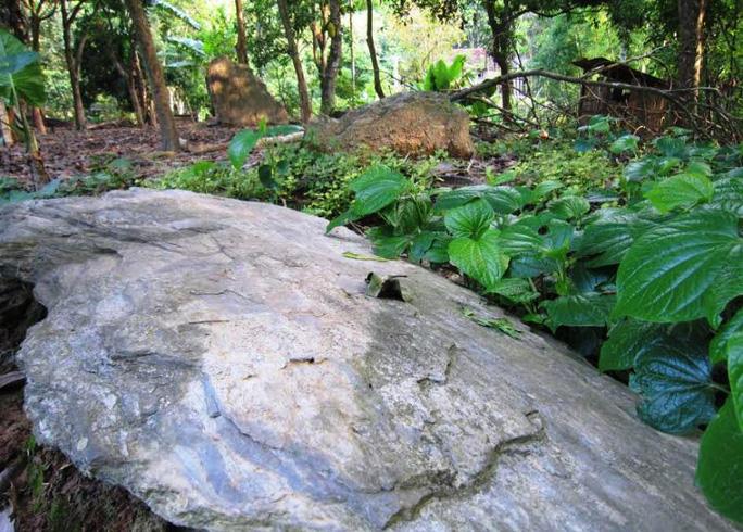 Khu mộ đá cổ còn nhiều bí ẩn trong vườn nhà anh Hà Minh Tâm ở bản Phai, xã Trung Thành, huyện Quan Hóa (Thanh Hóa)