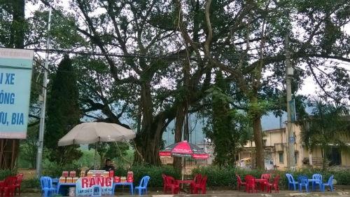 Một trong những cây đa còn sót lại trong câu chuyện kể về cuộc đọ sức của các thầy Trượng.