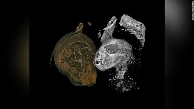 Các xác ướp Ai Cập được chụp micro CT gần đây. Từ trái qua phải: Xác ướp rắn, xác ướp mèo và xác ướp chim