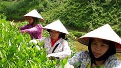 Bắc Kạn: Đào tạo nghề gắn với giải quyết việc làm cho lao động nông thôn