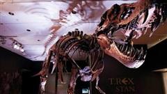 Bộ xương khủng long bạo chúa lớn nhất thế giới ra đấu giá