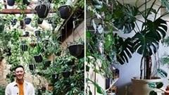 Ngắm 'rừng trong nhà' độc đáo của kiến trúc sư 32 tuổi