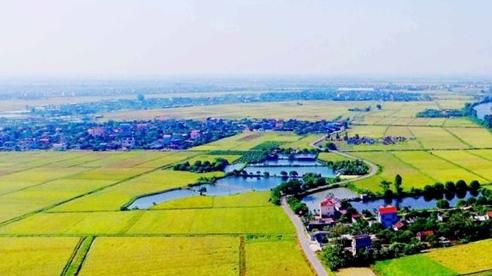 Chuyển mục đích sử dụng hơn 39ha đất nông nghiệp tại tỉnh Hải Dương