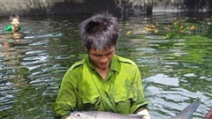 Chàng trai bỏ công việc lương cao về quê nuôi cá 'khổng lồ': Không phải ai chán thành phố cũng về quê 'nuôi cá và trồng thêm rau' được đâu!