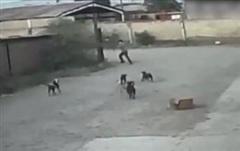 Đi dạo một mình, người đàn ông bị 6 con chó hoang cắn chết