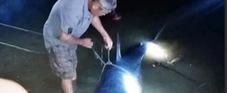 Cá mập 200 kg mắc câu trôi dạt vào sông