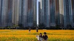 24h qua ảnh: Cặp tình nhân chụp ảnh trên cánh đồng hoa cánh bướm