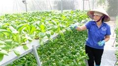 [Ảnh] Thăm nông trang rau thủy canh 'ăn ngay tại vườn' ở Hà Nội