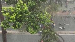 Mổ cấp cứu cho bệnh nhân bị cây cổ thụ đè, chấn thương nặng