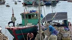 Ủy ban châu Âu sẽ không gỡ'thẻ vàng' nếu còn tàu cá vi phạm