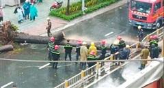 Cây cổ thụ bật gốc trong cơn mưa đè người đàn ông tử vong