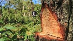 Phá rừng - vấn nạn tàn phá hệ sinh thái