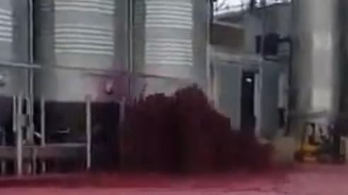 Nhà máy ở Tây Ban Nha bị 'nhuộm đỏ' trong 50.000 lít rượu vang