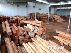 Gia Lai: Bắt giam đối tượng bán gỗ lậu cho doanh nghiệp Hùng Ny