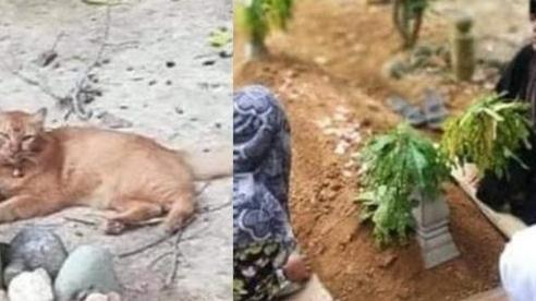 Con mèo trung thành hằng ngày tới thăm mộ chủ quá cố suốt 2 năm
