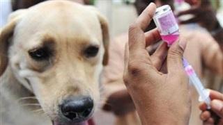 Ngày Thế giới phòng chống bệnh dại 28/9: Sử dụng vaccine kịp thời để hạn chế tử vong