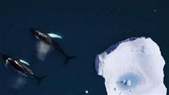 15 sự thật về Bắc Cực, nơi bí ẩn nhất Trái đất