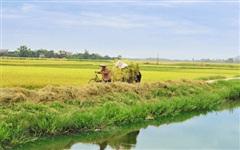 Diamond Eco City đăng ký bán 6,5 triệu cổ phần Nông nghiệp Bình Thuận (ABS)