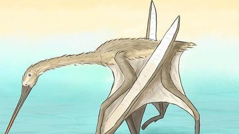 'Quái thú' đầu cò, mình khủng long, cánh dơi xuất hiện ở Thổ Nhĩ Kỳ