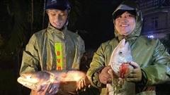 Hàng trăm người dân Hà Tĩnh đổ xô xuống quốc lộ bắt cá 'khủng', nhiều con trên 4kg