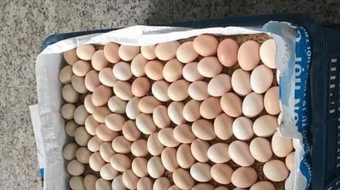 Trứng gà ác đắt gấp đôi trứng thường: Tiểu thương chỉ cách chọn hàng chuẩn