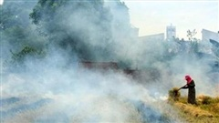 Việt Nam sẽ nhận hơn 51 triệu USD nhờ giảm phát thải