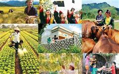 Hoàn thiện hồ sơ chủ trương đầu tư Chương trình Mục tiêu Quốc gia