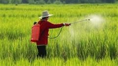 Từng 'gây sốc' với chuỗi 16 phiên tăng trần rồi giảm sâu, Nông nghiệp Bình Thuận (ABS) thông báo chào bán riêng lẻ 42,5 triệu cổ phiếu