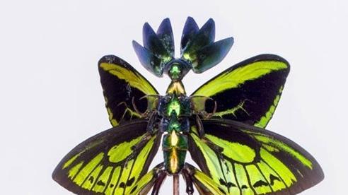 Kinh ngạc các tác phẩm lắp ghép làm từ xác côn trùng chết