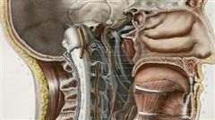 Hé lộ khả năng tìm thấy bộ phận mới trong đầu người