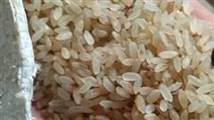 Đặc sản Yên Bái: Loại gạo ngậm sương, không dám phơi nắng