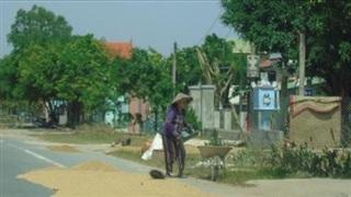 Quảng Bình: Nước rút, trời hừng nắng, người dân tranh thủ phơi lúa