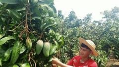 Liên minh HTX Đắk Nông thúc đẩy tìm đầu ra cho sản phẩm HTX nông nghiệp