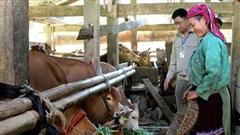 Bắc Mê (Hà Giang): Người dân được quyết định trồng cây gì, nuôi con gì để thoát nghèo