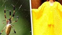 Cận cảnh tấm áo choàng làm từ tơ 1,2 triệu con nhện, độc nhất vô nhị trên thế giới