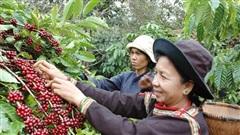Lâm Đồng: Vốn chính sách giúp trên 12.300 hộ vượt qua ngưỡng nghèo