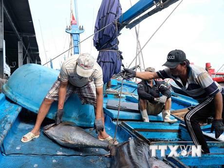 ASEAN Today ca ngợi nỗ lực của Việt Nam chống đánh bắt cá bất hợp pháp