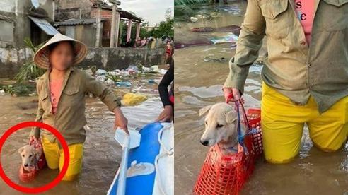 Xúc động hình ảnh người phụ nữ lội trong nước lũ, không quên xách theo chú chó trong chiếc làn nhỏ