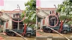 Video: Hai chú trâu trên mái nhà được tiếp đất sau khi lũ rút, dân mạng tò mò cách 'giải cứu'