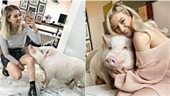 Nữ blogger sống cùng lợn 80kg, cùng chồng bôi kem chống nắng cho thú cưng mỗi khi ra ngoài