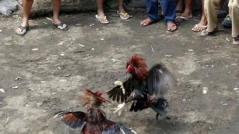 Hy hữu cảnh sát Philippines mất mạng khi triệt phá trường gà