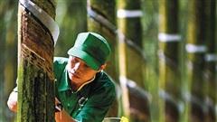 Mảng cao su phục hồi, Tập đoàn Cao su (GVR) lãi 1.191 tỷ đồng trong quý 3