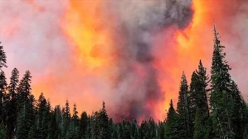 Cháy rừng tại bang California, nhiều người Mỹ gốc Việt phải sơ tán