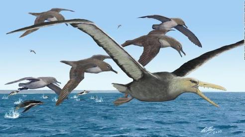 Loài chim khổng lồ có răng từng thống trị bầu trời Nam Cực