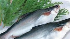 Chi phí tăng cao, giá cá tra xuất khẩu giảm, IDI báo lãi quý 3 giảm một nửa so với cùng kỳ
