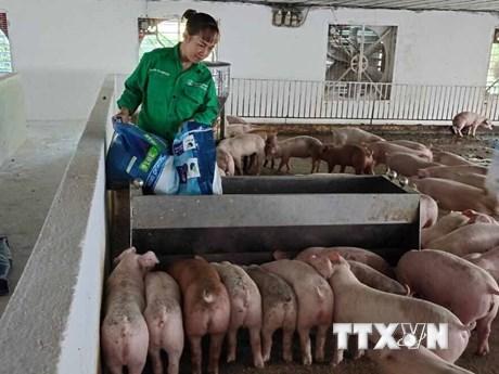 Gương nông dân Việt Nam xuất sắc: Nữ tỷ phú nuôi lợn ở tỉnh Vĩnh Phúc