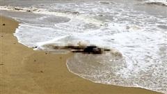 Vụ thi thể trôi vào biển Hà Tĩnh: Hình xăm đặc biệt hé lộ danh tính nạn nhân